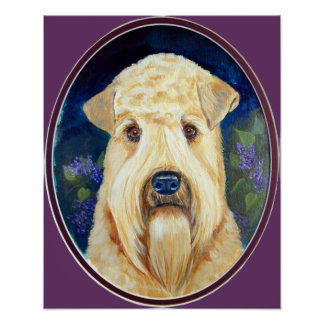 Soft Coated Wheaten Terrier PRINTS Posters