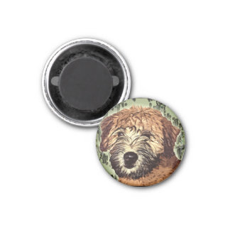 Soft-Coated Wheaten Terrier Puppy with Wet Face 1 Inch Round Magnet