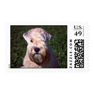 Soft-coated Wheaten Terrier Stamp