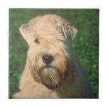 Soft Coated Wheaten Terrier Tile