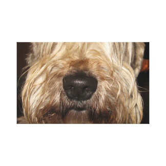 soft coated wheaton terrier.png canvas print