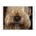 soft coated wheaton terrier.png card