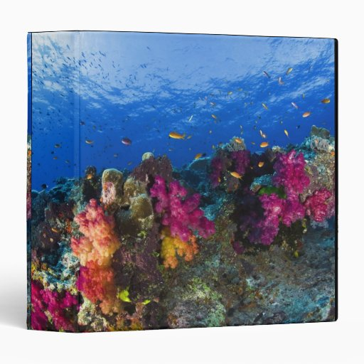 Soft corals on shallow reef, Fiji 3 Ring Binders