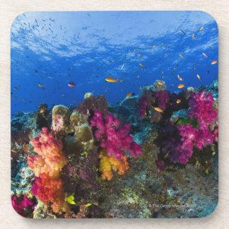 Soft corals on shallow reef, Fiji Beverage Coaster