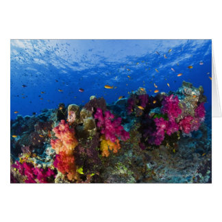 Soft corals on shallow reef, Fiji Greeting Cards