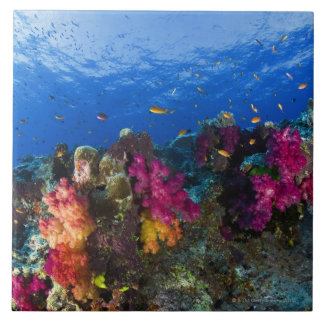 Soft corals on shallow reef, Fiji Ceramic Tile