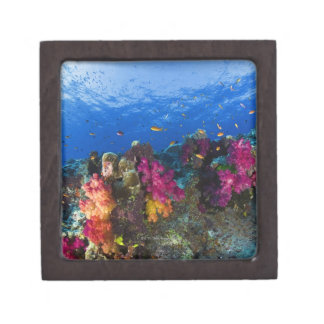 Soft corals on shallow reef, Fiji Keepsake Box