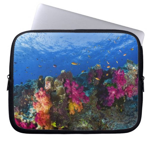 Soft corals on shallow reef, Fiji Laptop Computer Sleeves