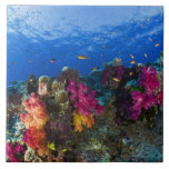 Soft corals on shallow reef, Fiji Large Square Tile