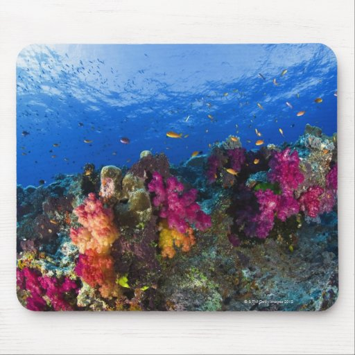 Soft corals on shallow reef, Fiji Mouse Pad