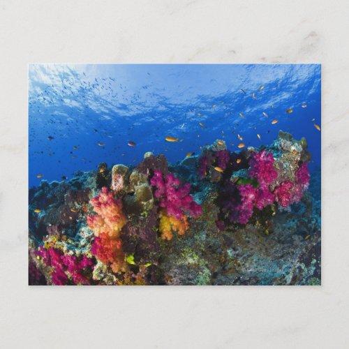 Soft corals on shallow reef Fiji Postcard