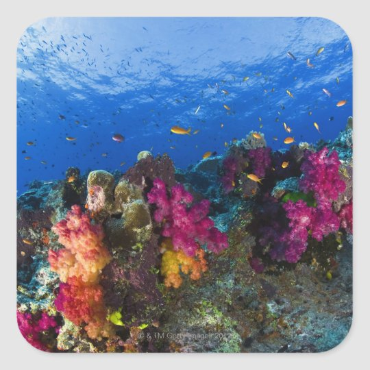 Soft corals on shallow reef, Fiji Square Sticker