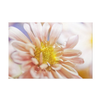 Soft Flower and Water Drop Photograph Canvas Print