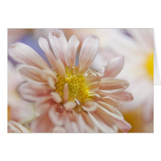 Soft Flower and Water Drop Photograph Card