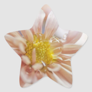 Soft Flower and Water Drop Photograph Star Sticker