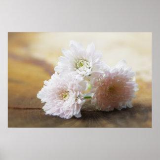 Soft Flower Plakate