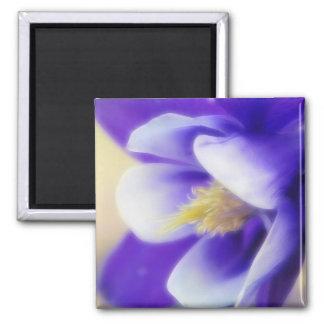 Soft Focus Blue Columbine 2 Inch Square Magnet