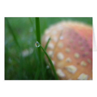 Soft focus card