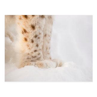 Soft golden lynx paws in snow postcard