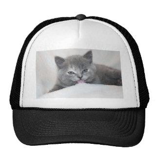 Soft Gray Kitty Trucker Hat