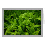 Soft green spring time wood ferns in forest card