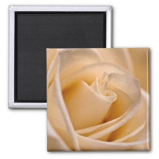 Soft Ivory Rose Square Magnet