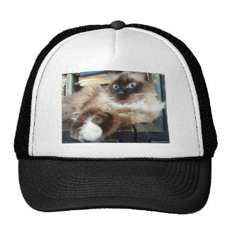 soft kitty warm trucker hat
