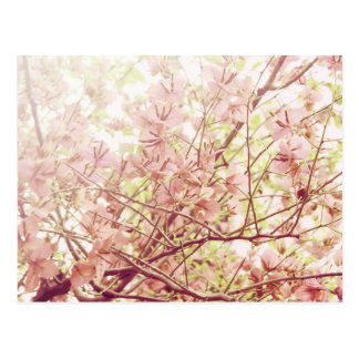 Soft Pastel Floral Branches Postcard