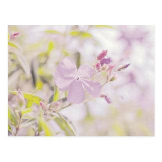 Soft Pastel Flower Photograph Postcard
