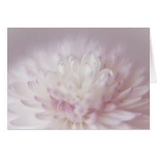 Soft Pastel Flower Photography Card