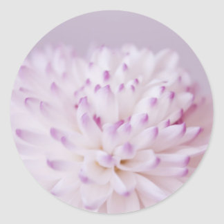 Soft Pastel Flower Photography Classic Round Sticker