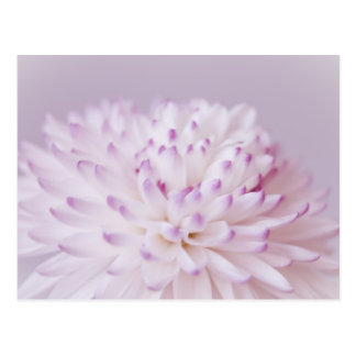 Soft Pastel Flower Photography Postcard