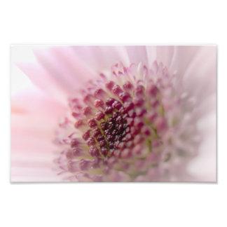 Soft Pastel Pink Flower Close up Photo Print