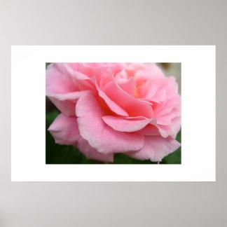 Soft Petals Poster