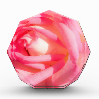 Soft Pink Acrylic Award