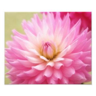 Soft Pink Dahlia Print Photo Art