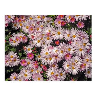 Soft Pink Daisy Pattern Postcard