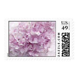 Soft Pink Hydrangea Blossom Postage