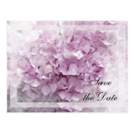 Soft Pink Hydrangea Save the Date Announcement Postcard