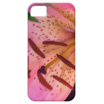 Soft Pink Lily iPhone 5 Cover