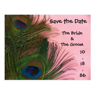 Soft Pink Peacock Feathers Save the Date Postcard