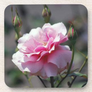 Soft pink rose and buds beverage coaster
