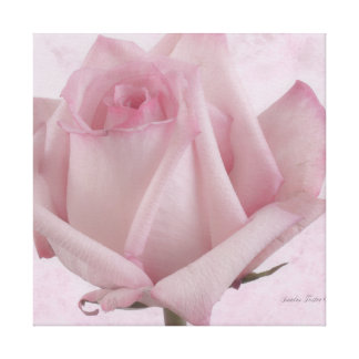 Soft Pink Rose Flower Canvas Print