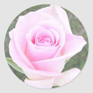 Soft Pink Rose Stickers