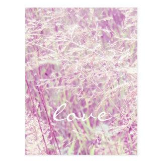 Soft Pink Tint Grass Postcard