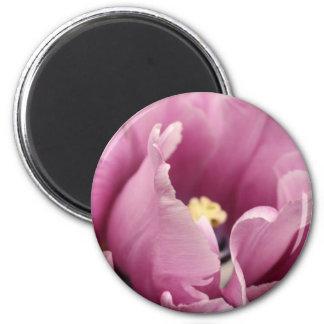 Soft pink tulip, NEW! 2 Inch Round Magnet