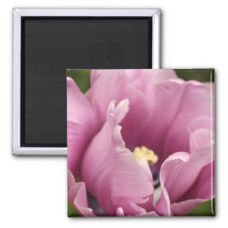 Soft pink tulip, NEW! 2 Inch Square Magnet