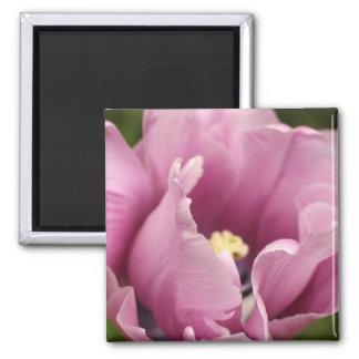 Soft pink tulip, NEW! Refrigerator Magnets
