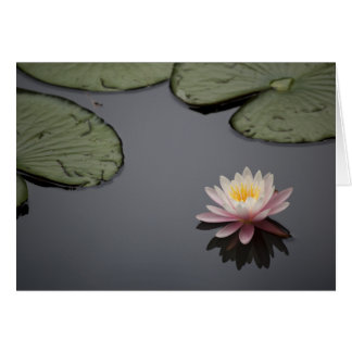 Soft Pink Water Lily Flower Stationery Note Card