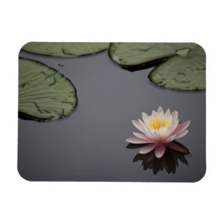 Soft Pink Waterlily Flower Magnet